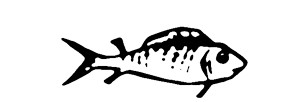 Monochrome drawing of a small fish, swimming left to right, with a wide open eye and a slightly perky expression. It is actually J.O. Morgan's fish, from his book 'In Casting Off', the sole illustration in that poem novella.